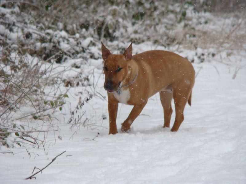 abyss en balade dans les bois sous la neige fevrier 2009