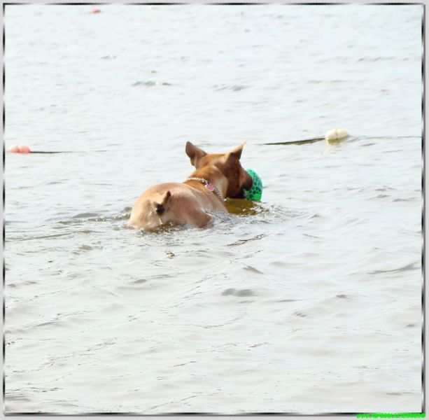 abyss chien qui nage meilleur du monde record de vitesse 400 metres