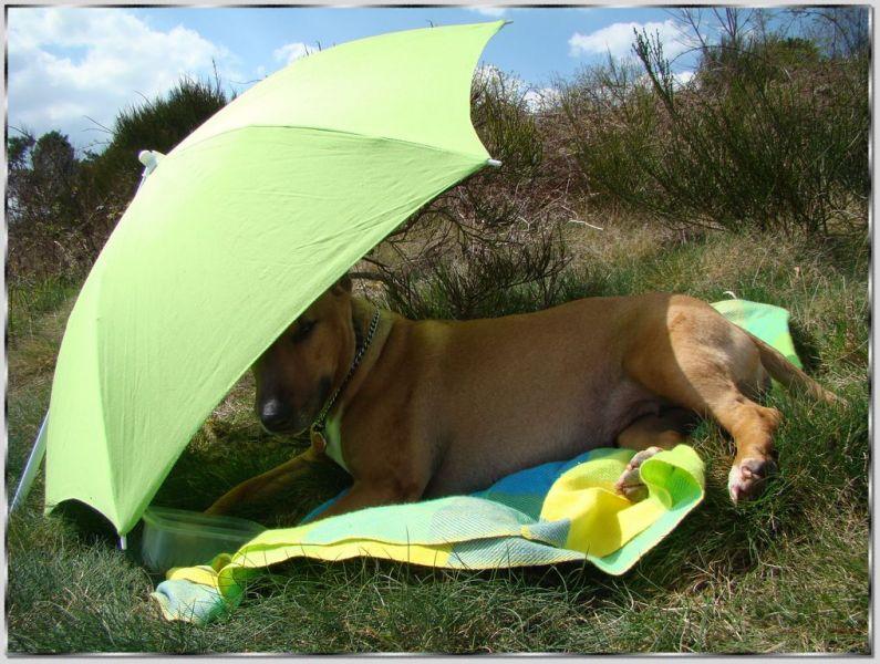 R sultats de recherche blog bull terrier abyss bull terrier - Oignon sous le lit combien de temps ...
